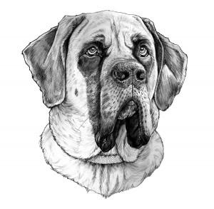Erics-Dog-opt